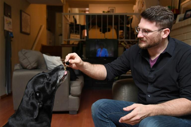 Brett Hartman gives his dogs Cayley, a six-year-old-Labrador Retriever drops of a cannabis based medicinal tincture to treat hip pain and anxiety
