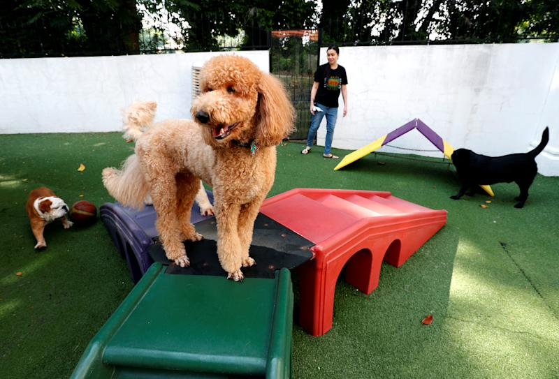 Dogs play at The Wagington luxury pet hotel in Singapore December 6, 2017. REUTERS/Edgar Su