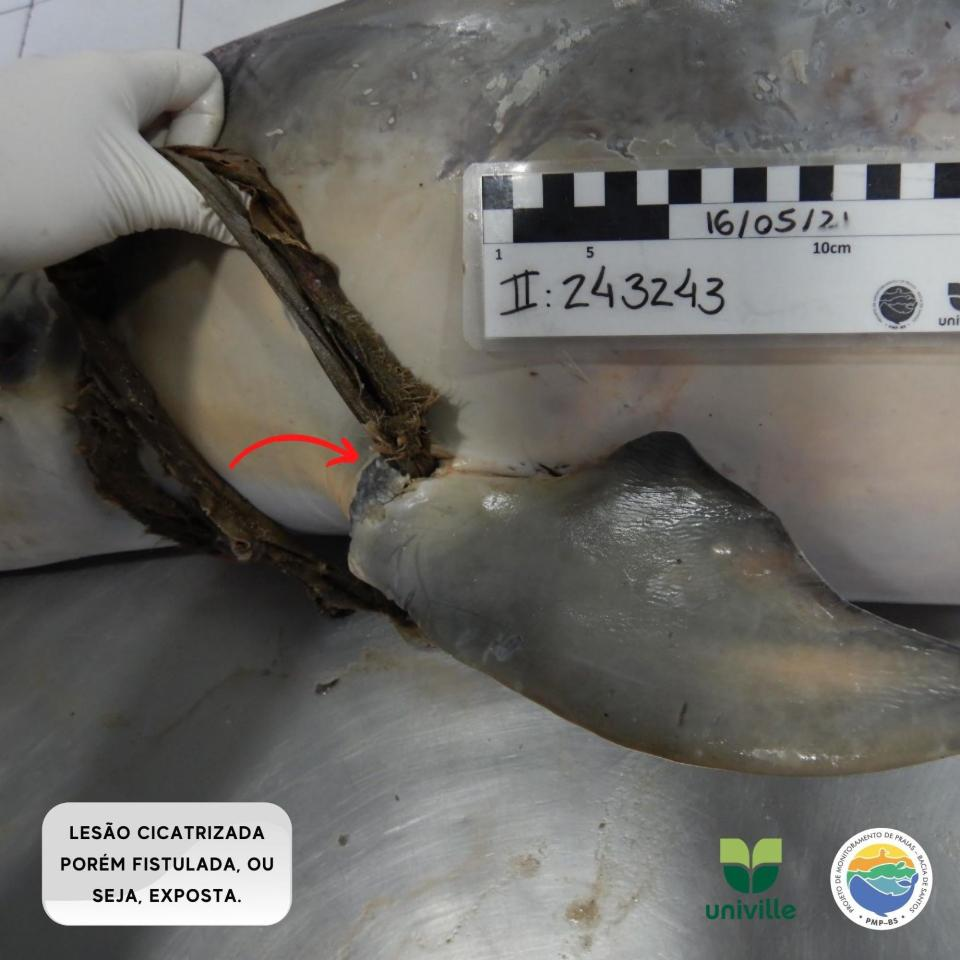 It's believed the panties had been stuck on the flipper for a long time, Source: Australscope/Newsflash