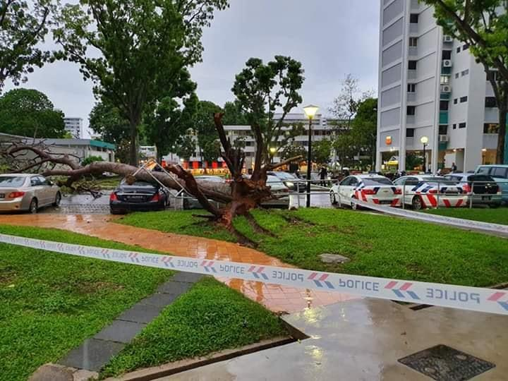 A toppled tree in Bedok North. Photo: Singaporeroadaccidents.com/Facebook