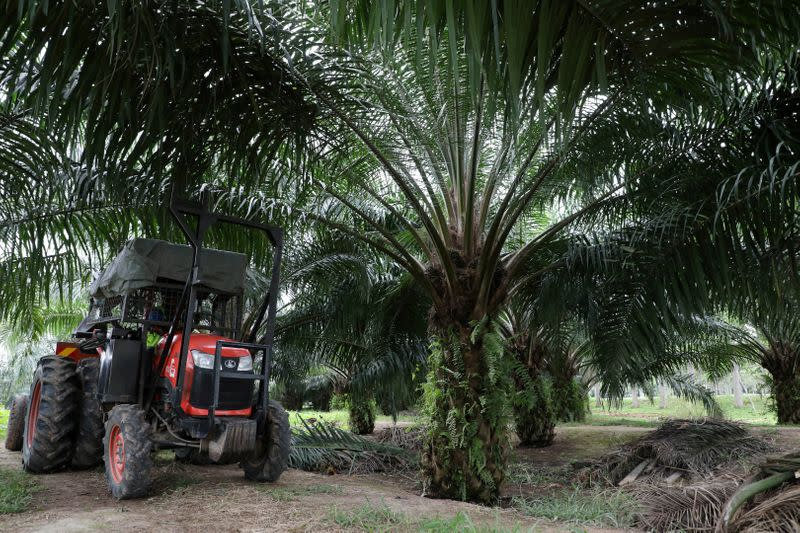 FILE PHOTO: A mini tractor grabber collects palm oil fruits at a plantation in Pulau Carey