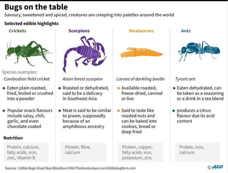 High in protein, cheap to produce, and with a much lighter carbon footprint than meat or dairy farming, bugs are already part of the diet for more than two billion people worldwide, according to the United Nations