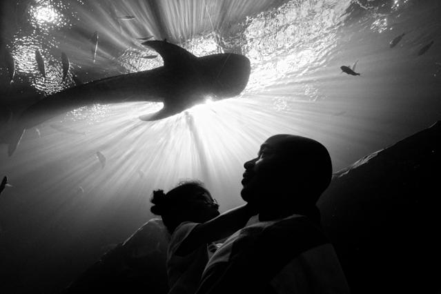 <p>Carlos Richardson and Selah admire the fish at Georgia Aquarium, Atlanta, Ga., 2012. (Photograph © Zun Lee) </p>