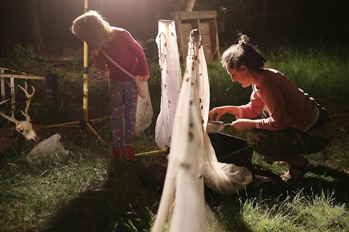 <p>In Lanham, Maryland, Veri Tas and the Biedrzycki family collect cicadas from all around their home in nets on May 17.</p>