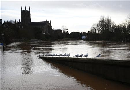 Birds perch, surrounded by flood waters in Worcester, central England February 13, 2014. REUTERS/Darren Staples