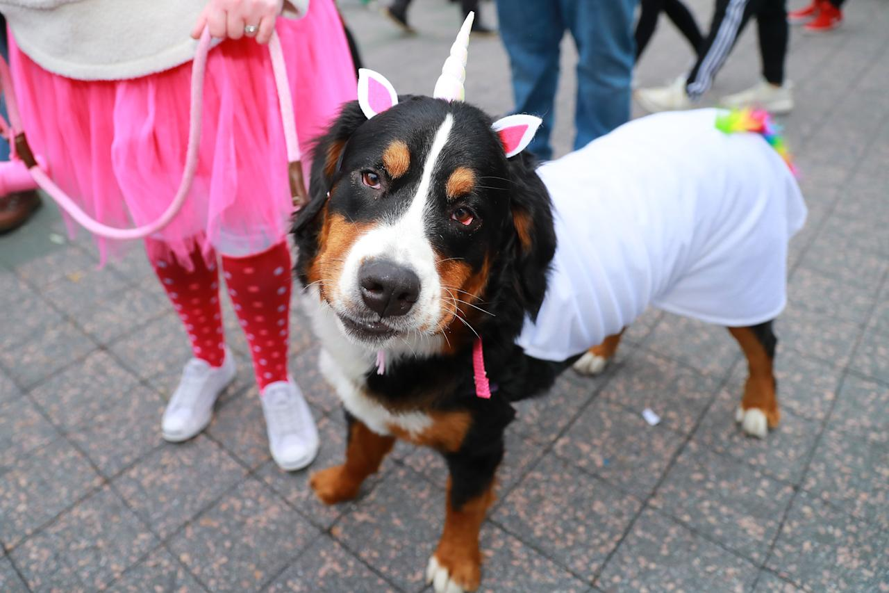 <p>A dog dressed as a unicorn doesn't look so happy at the 28th Annual Tompkins Square Halloween Dog Parade at East River Park Amphitheater in New York on Oct. 28, 2018. (Photo: Gordon Donovan/Yahoo News) </p>