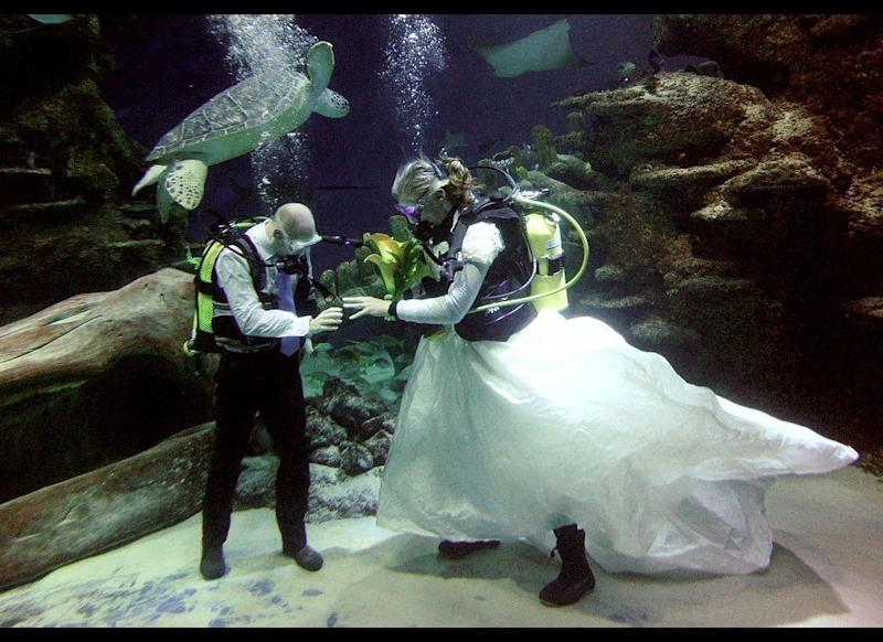 Aquarist James Oliver, left, slips a ring onto Kathryn O'Connor while a giant green turtle swims by during an underwater blessing on Valentine's Day in the Ocean Reef Display in the London Aquarium on Feb. 14. Celebrant Daniel Winchester conducted the ceremony from the other side of the glass using placards to communicate with the couple. The couple, neither of whom believe in a formal wedding, dressed in wedding finery and breathing apparatus and received their blessing surrounded by giant green sea turtles, cownose rays and shoals of colorful fish.