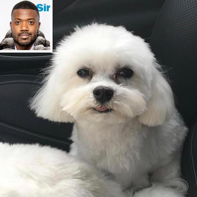 Ray J's Beloved Dog Boogotti Has Allegedly Been Dognapped, Singer Is Offering a $20,000 Award
