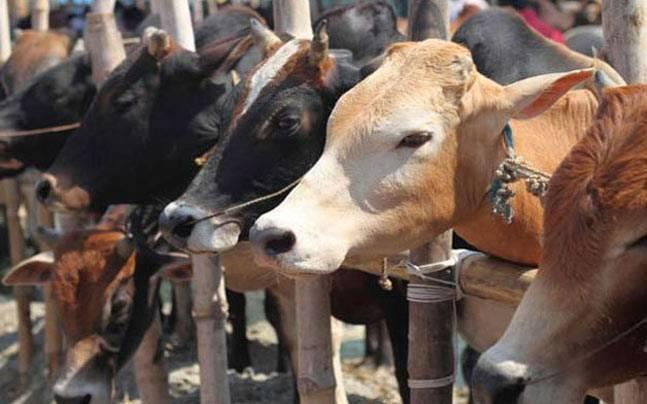 BJP's Goa ally calls for complete ban on cow slaughter in the state