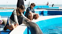 """<p><strong>Hulu's Description:</strong> """"In this heartwarming family adventure, the search for a missing dolphin leads two kids to uncover a real-estate development plan that endangers the sea life on a Florida beach.""""</p> <p><span>Stream <strong>Bernie the Dolphin</strong> on Hulu!</span></p>"""