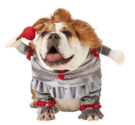 """Get this <a href=""""https://fave.co/341FTd8"""" target=""""_blank"""" rel=""""noopener noreferrer"""">Rubie's Costume Company Penny Wise Dog & Cat Costume for $14</a> (normally $26) at Chewy.It's available in sizes S-XL and has a cute wig."""