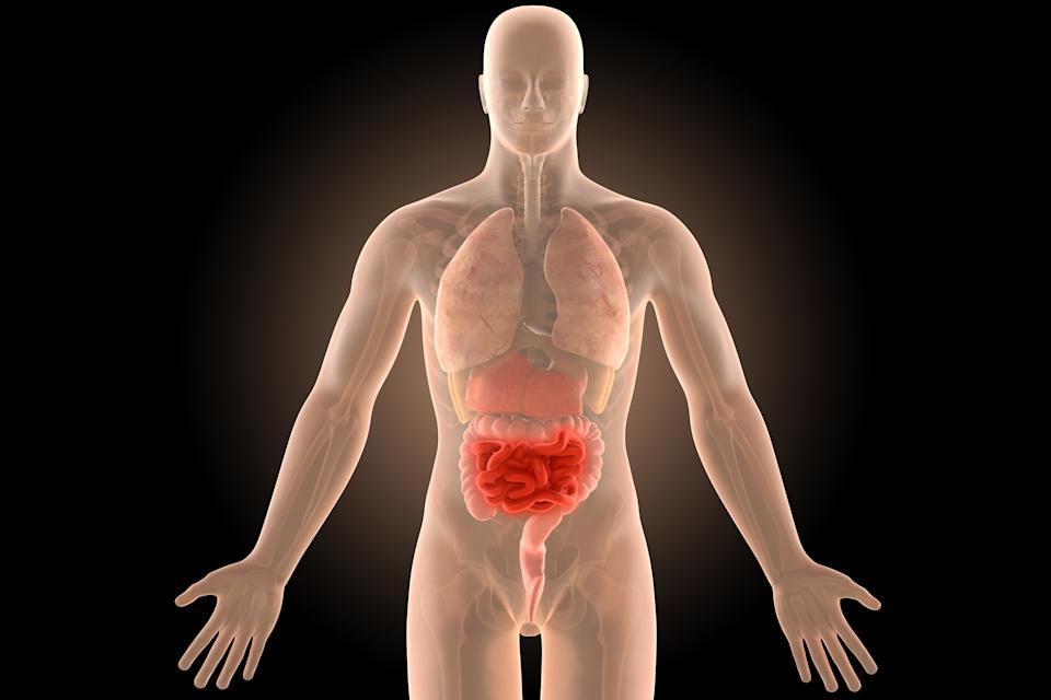 3d illustration human body crohn's intestines infection with clipping path.