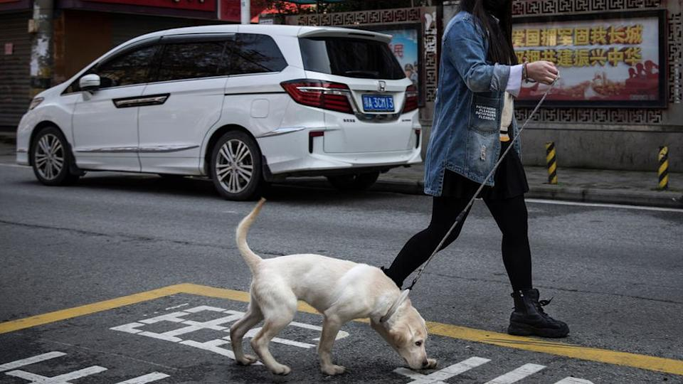 Resident wears a protective mask while walking a dog in the street on February 5, 2020 in Wuhan, Hubei province, China.