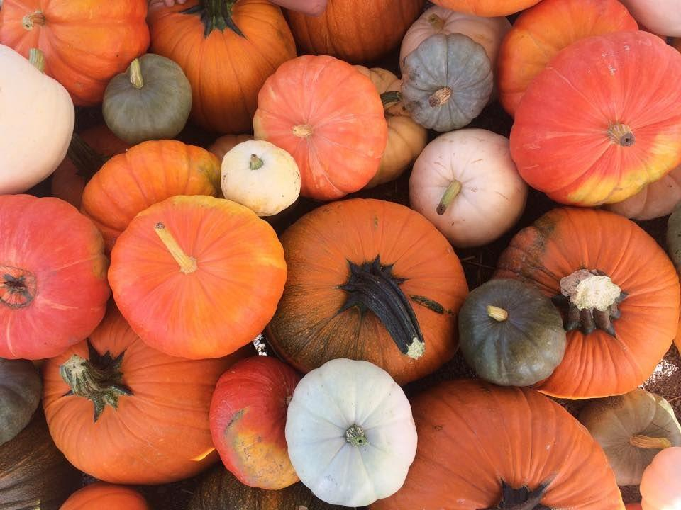 """<p><strong>Sparks, Nevada</strong></p><p>With a 5-acre corn maze and a U-Pick pumpkin patch, you'll pick and hunt your way to your beloved pumpkin in no time at <a href=""""https://www.andelinfamilyfarm.com/"""" rel=""""nofollow noopener"""" target=""""_blank"""" data-ylk=""""slk:Andelin Family Farm"""" class=""""link rapid-noclick-resp""""><strong>Andelin Family Farm</strong></a>. Other fun activities include pony rides, corn cannons and scarecrow paintball! Tickets start at $8 (Wed-Fri) or $9 (Sat) per person, but children under 2 can walk in for free. </p>"""