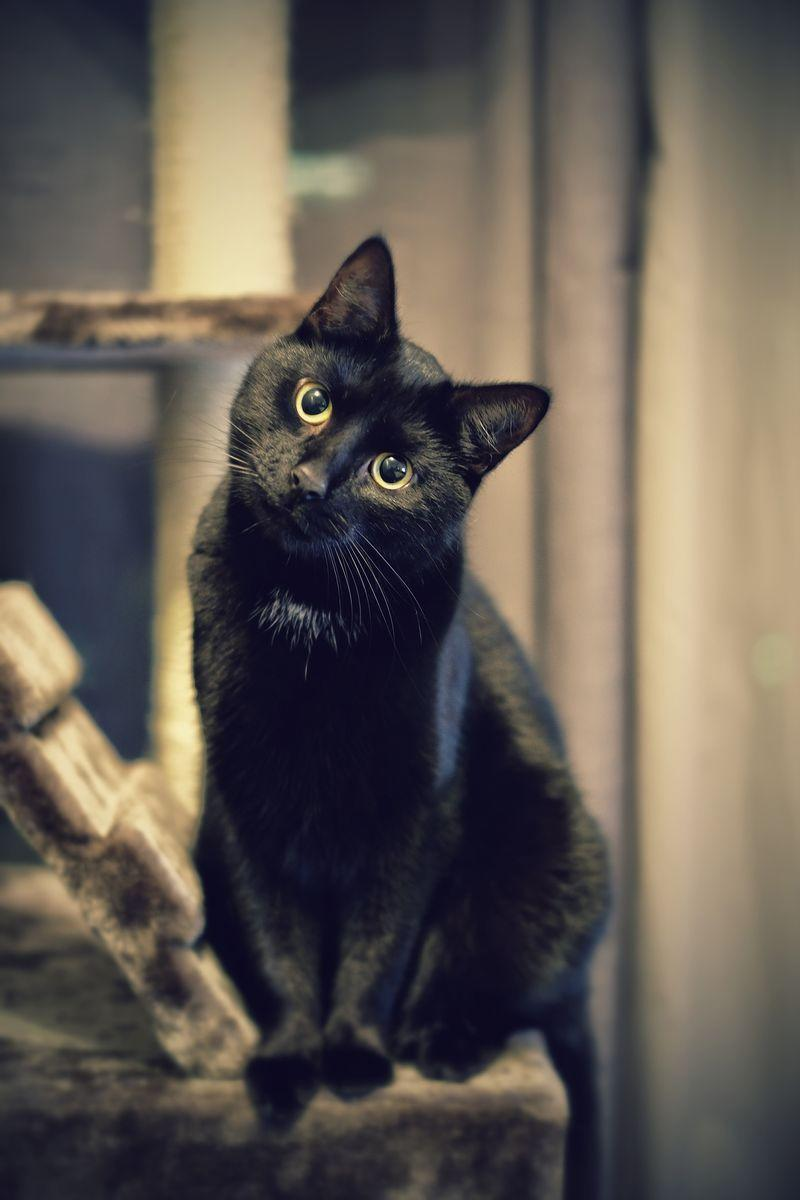 """<p>Answer: It's been said that it's bad luck for a black cat to cross your path, especially on <a href=""""https://www.womansday.com/life/g1908/cheap-and-easy-ways-to-celebrate-halloween/"""" rel=""""nofollow noopener"""" target=""""_blank"""" data-ylk=""""slk:Halloween night"""" class=""""link rapid-noclick-resp"""">Halloween night</a>. In the U.S., this superstition stems from the Protestant beliefs of the <a href=""""https://www.hartz.com/how-black-cats-came-to-halloween/"""" rel=""""nofollow noopener"""" target=""""_blank"""" data-ylk=""""slk:Puritan Pilgrims of Plymouth Colony"""" class=""""link rapid-noclick-resp"""">Puritan Pilgrims of Plymouth Colony</a>, according to pet supply company Hartz. They disapproved of anything associated with witchcraft, and some believed the legend that witches could transform into black cats and back — hence the inspiration for pop culture characters like Salem on <em>Sabrina the Teenage Witch </em>and <a href=""""https://www.womansday.com/life/entertainment/g3264/hocus-pocus-movie-cast-pictures/"""" rel=""""nofollow noopener"""" target=""""_blank"""" data-ylk=""""slk:Binx in Hocus Pocus."""" class=""""link rapid-noclick-resp"""">Binx in <em>Hocus Pocus.</em></a> </p>"""