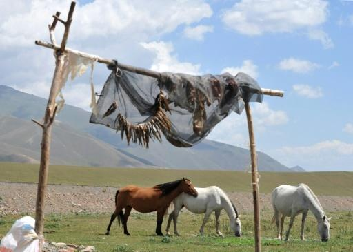 Kyrgyzstan expels Briton after 'horse penis' Facebook comment