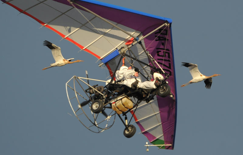 FILE In this Wednesday Sept. 5, 2012 file photo Russian President Vladimir Putin flies in a motorized hang glider alongside two Siberian white cranes, on the Yamal Peninsula, in Russia. Putin has become alternately notorious and beloved for an array of adventurous stunts, including posing with a tiger cub and riding a horse bare-chested. (AP Photo/RIA-Novosti, Alexei Druzhinin, Presidential Press Service)