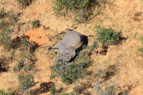 PHOTO: This image provided on July 3, 2020, courtesy of the National Park Rescue charity shows the carcass of one of the many elephants which have died mysteriously in the Okavango Delta in Botswana. (AFP Photo/National Park Rescue)