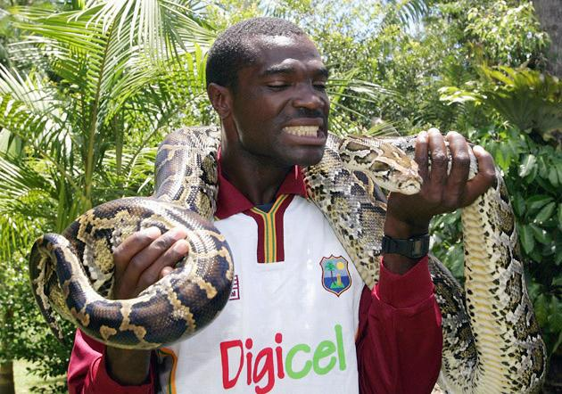 GOLD COAST, AUSTRALIA - JANUARY 16:  Chirstopher Gayle of the West Indies holds a python during a visit to Australia Zoo on January 16, 2005 at Beerwah on the Sunshine Coast, Australia.  (Photo by Jonathan Wood/Getty Images)