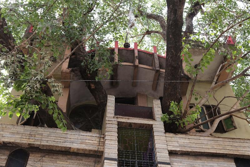 Branches of a peepal tree (sacred fig tree) protrude from the Kesharwani family's home in the Indian state of Madhya Pradesh (AFP Photo/Uma Shankar MISHRA)