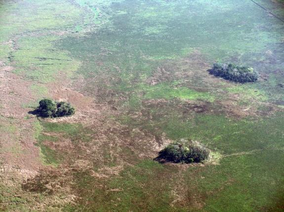 Small, forested earthen mounds scattered throughout the seasonal floodplains of the Llanos de Moxos in the Bolivian Amazon.