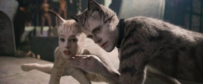Two cats looking offscreen