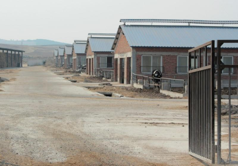 FILE PHOTO: Cow farm houses of Huishan Dairy are seen in Shenyang