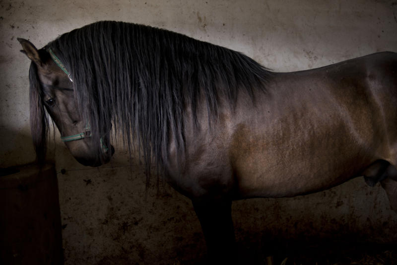 Legendary horses latest victim of Spain's bust