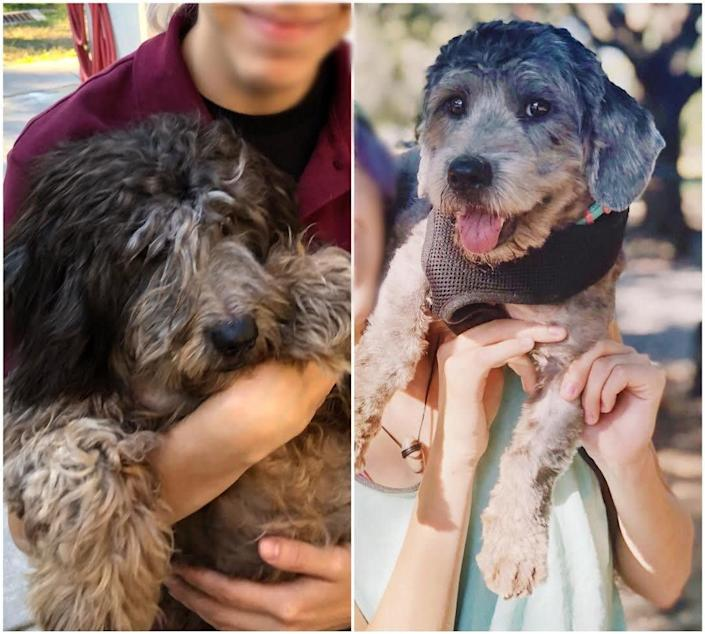 """""""This is Bella. The photo on the left was taken as soon as we got to the shelter. She was a mess: coat matted and long, she couldn't even see, but we fell in love! We took her home, cleaned her up, and now she's a healthy, happy puppy. I love her little smile and how her tongue always sticks out of her mouth!"""" --<i> Krystal K., Bella's mom</i>"""