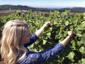 Christine Clair, winery director of Willamette Valley Vineyards, inspects pinot noir grapes on Friday, July 9, 2021 in Turner, Ore. After a recent record heat wave and more hot weather expected, vineyard workers will trim less of the leaf canopy to keep the grapes shaded and prevent sunburn. Winemakers in the normally cool, rainy Pacific Northwest are worried about what's still ahead this summer amid a historic drought tied to climate change and wildfire risk. (AP Photo/Andrew Selsky)
