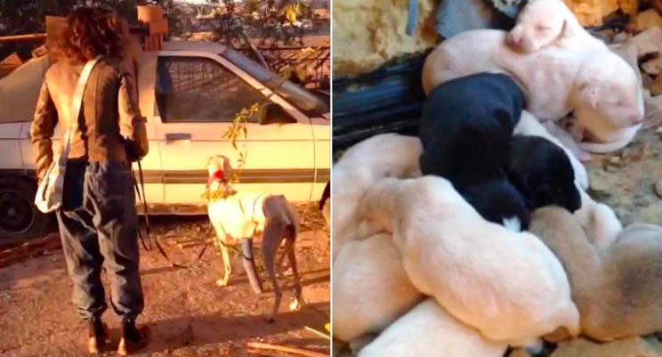 Inspirational: The dog led vets to exactly where she had left her puppies (Caters)