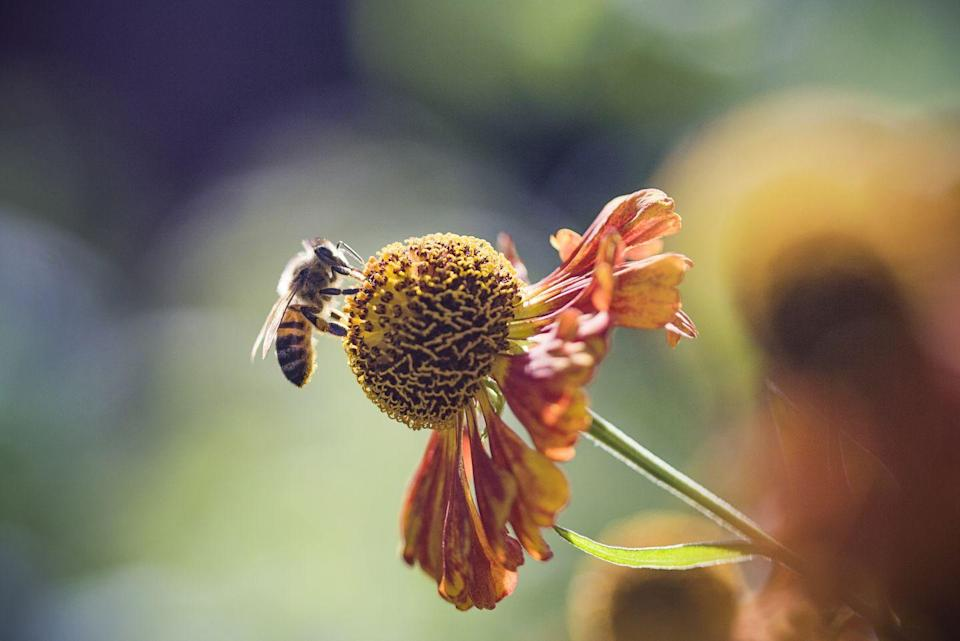 <p><strong>Honey Bee<br><br></strong>Yup, another state that picked this sweet bug as its state insect. </p>