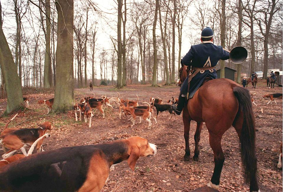 A hunter and his hounds move through the woods on a twice-weekly deer hunt in the Retz woodlands northeast of Paris, March 17, 1998. European hunters, facing moves to ban or restrict their hobby,say they are preserving rural traditions and performing a vital ecological function, controlling wildlife population. (AP Photo/ Yves Logghe)