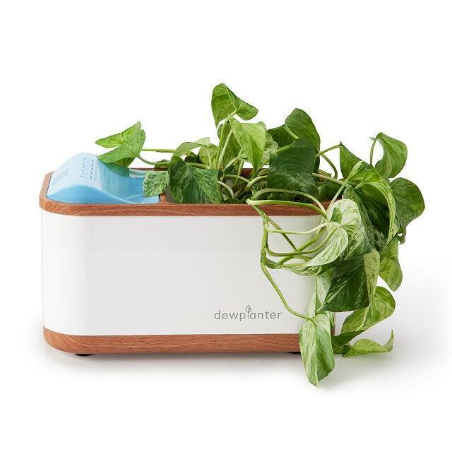 """<h2>Uncommon Goods Water-Generating Planter</h2><br><strong>Best For: Forgetful Plant Parents</strong><br>For your average self-watering pot, you have to at least remember to fill it with water, but that task can be daunting for the most forgetful plant parents. Do not fret, there is still hope with this new-wave water-generating planter from Uncommon Goods. This wonder planter generates, """"clean, filtered water from condensed moisture in the air,"""" and your greenery is guaranteed to grow on autopilot. We can't believe it either.<br><br><em>Shop</em> <strong><em><a href=""""http://uncommongoods.com"""" rel=""""nofollow noopener"""" target=""""_blank"""" data-ylk=""""slk:Uncommon Goods"""" class=""""link rapid-noclick-resp"""">Uncommon Goods</a></em></strong><br><br><strong>Uncommon Goods</strong> Water-Generating Planter, $, available at <a href=""""https://go.skimresources.com/?id=30283X879131&url=https%3A%2F%2Fwww.uncommongoods.com%2Fproduct%2Fwater-generating-planter"""" rel=""""nofollow noopener"""" target=""""_blank"""" data-ylk=""""slk:Uncommon Goods"""" class=""""link rapid-noclick-resp"""">Uncommon Goods</a>"""