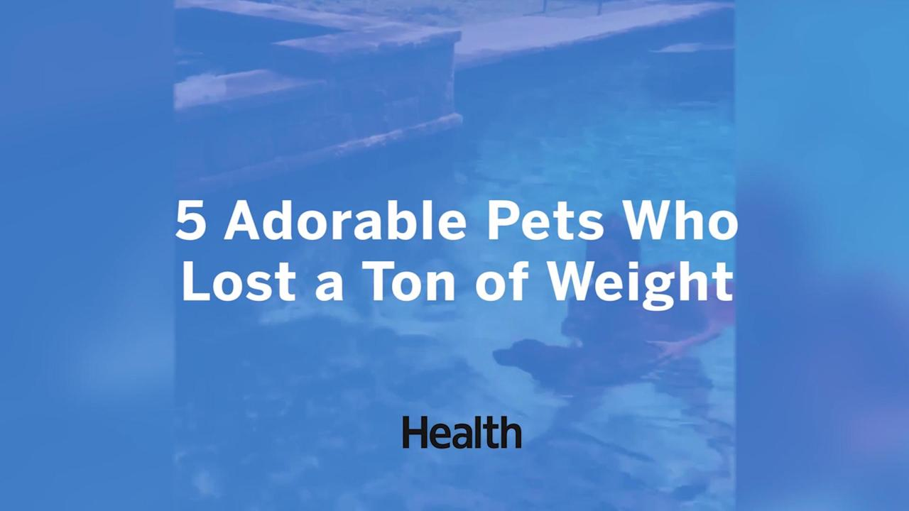 Watch the video to see these overweight pets adorable and amazing transformations.