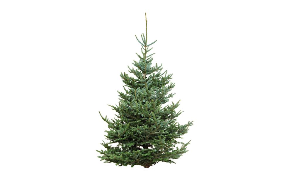 """<p><a rel=""""nofollow noopener"""" href=""""https://www.dobbies.com/products/christmas/real-trees/freshly-cut-fraser-fir/"""" target=""""_blank"""" data-ylk=""""slk:Dobbies, from £49.99"""" class=""""link rapid-noclick-resp""""><i>Dobbies, from £49.99</i></a><br><br></p>"""
