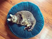 <p>We take it back: Cats look really, really cute on their own little beds. Like unbelievably cute. </p>