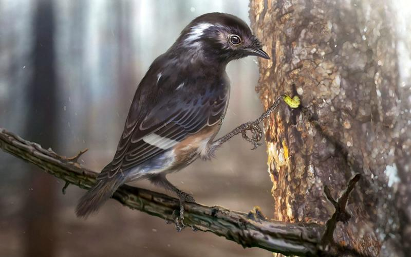 Scientist think the bird may have used its toe to hook grubs out of tree trunks - Zhongda Zhang / Current Biology