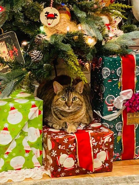 Wait, one of those presents looks different than the other ones...
