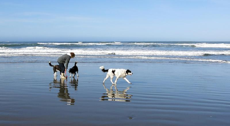 This image provided by Pamela J. Boehland shows Sue Canfield, and dogs Toby, Pike and Rascal in the surf off the California coastline. Watching as a beloved dog is swept out to sea is heart-wrenching. Doing nothing seems unthinkable. But experts say that is exactly what a dog owner should do: nothing. The average dog is a better swimmer than the average human. (AP Photo/Pamela J. Boehland)