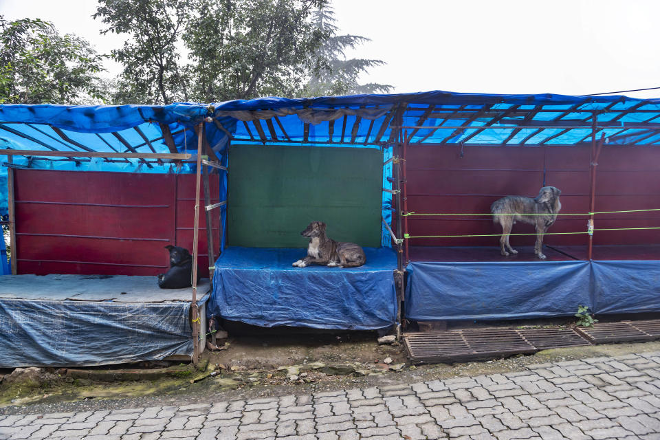 Dogs occupy roadside stalls lying empty due to the COVID-19 pandemic in Dharmsala, India, Sunday, Aug. 2, 2020. India is the third hardest-hit country by the pandemic in the world after the United States and Brazil. (AP Photo/Ashwini Bhatia)