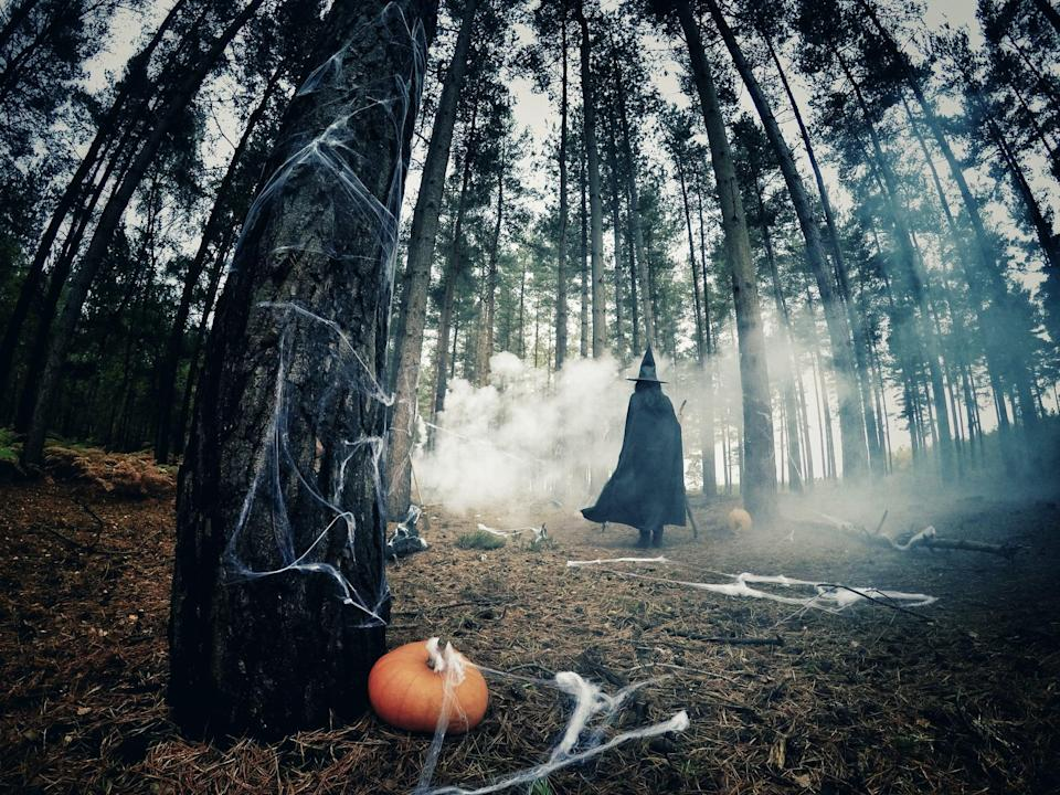 <p>We wouldn't dream of entering a spooky forest like this, but on Zoom, we shall. </p>