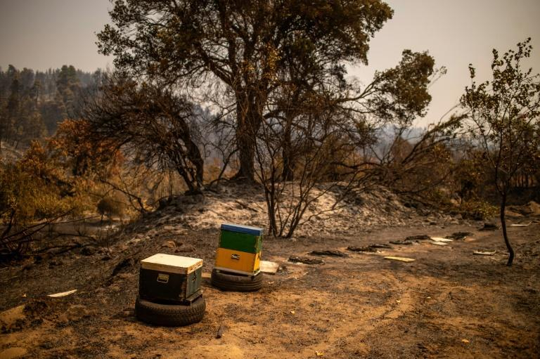 Heat waves increase the flammability of forests