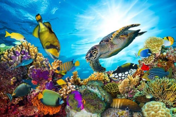 A new study suggests that, unless CO2 is drastically cut, Earth's oceans could lose 95 per cent of their existing climates. (Shutterstock/stockphoto-graf - image credit)