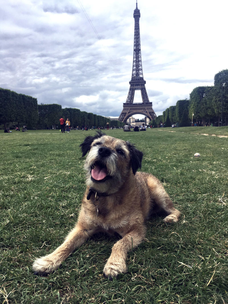 Pete the border terrier,, 10 at the Eifel Tower, Paris, France. (Photo: Caters News)