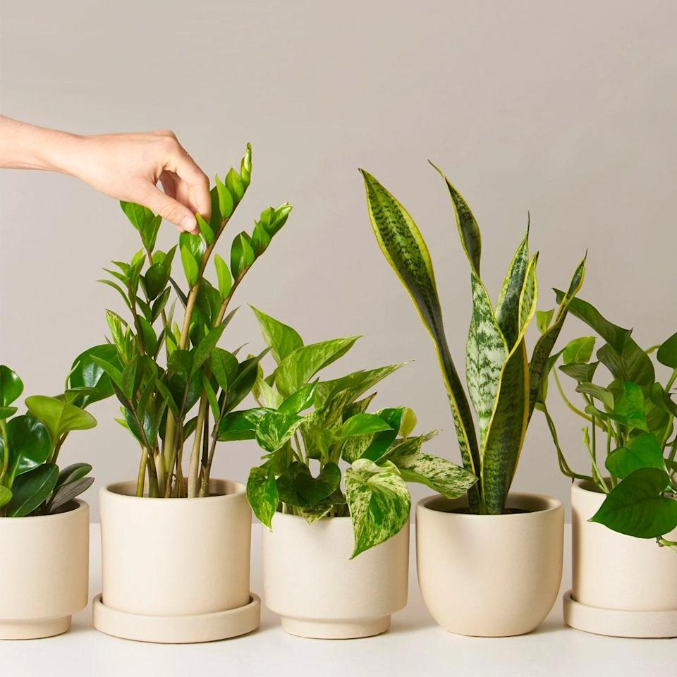 """At last, a subscription for all you first-generation <a href=""""https://www.glamour.com/story/best-plants-for-bedroom?mbid=synd_yahoo_rss"""" rel=""""nofollow noopener"""" target=""""_blank"""" data-ylk=""""slk:plant parents"""" class=""""link rapid-noclick-resp"""">plant parents</a>. Once a month, The Sill sends you a plant of your choosing (low-light, pet-friendly, medium-size, and beginners) in a very photogenic earthenware planter. By the time you're easing back out of quarantine, you'll have a family of leafy babies to tend to. $35, The Sill. <a href=""""https://www.thesill.com/products/low-light-potted-plants-monthly-subscription-box?"""" rel=""""nofollow noopener"""" target=""""_blank"""" data-ylk=""""slk:Get it now!"""" class=""""link rapid-noclick-resp"""">Get it now!</a>"""