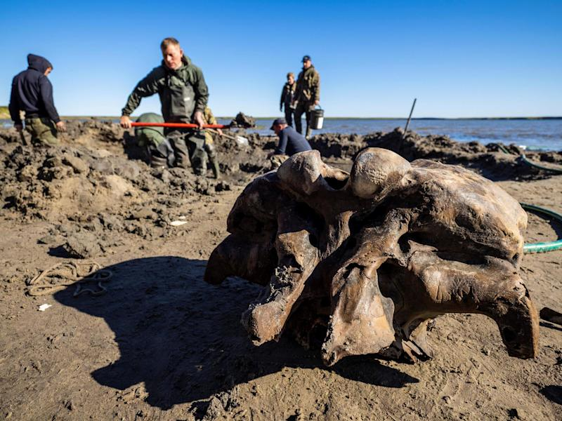 The bones of a mammoth are brought to the shore of Pechevalavato Lake in the Yamalo-Nenets autonomous district, Russia on 22 July, 2020: Government of Yamalo-Nenets District/Handout via REUTERS