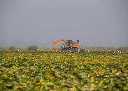 A de-weeding machine is used to remove weeds and lotus lilies at Dal lake in Srinagar, Indian controlled Kashmir, Tuesday, Sept. 14, 2021. Weeds, silt and untreated sewage are increasingly choking the sprawling scenic lake, which dominates the city and draws tens of thousands of tourists each year. (AP Photo/Mukhtar Khan)