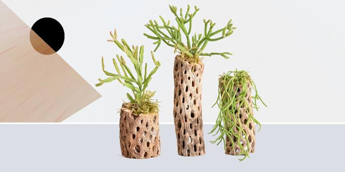 """<div class=""""caption""""> By sticking various jungle cacti into dried Cholla wood, Pistils Nursery managed to make a 100 percent natural plant/planter combo that's as low-maintenance as it gets. (Just soak it in the sink for 5 minutes whenever the moss is dry.) <br> <a href=""""https://shop.pistilsnursery.com/products/oasis-in-the-desert"""" rel=""""nofollow noopener"""" target=""""_blank"""" data-ylk=""""slk:SHOP NOW"""" class=""""link rapid-noclick-resp"""">SHOP NOW</a>: Oasis in the Desert by Pistils Nursery, from $14, shop.pistilsnursery.com<br> </div> <cite class=""""credit"""">Photo courtesy of Pistils Nursery</cite>"""