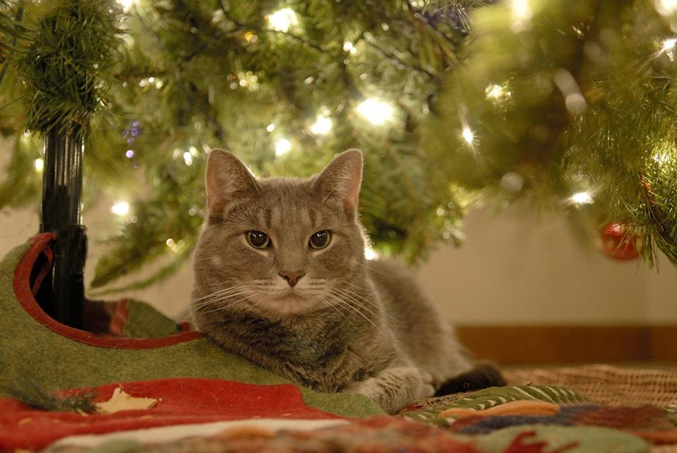 A cat relaxing underneath the christmas tree.